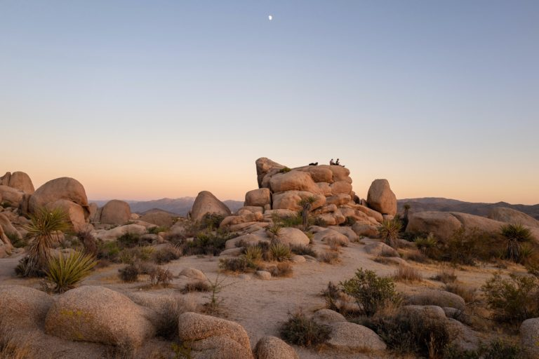 The Best Joshua Tree Wedding Guide [Venues, Packages, + More]