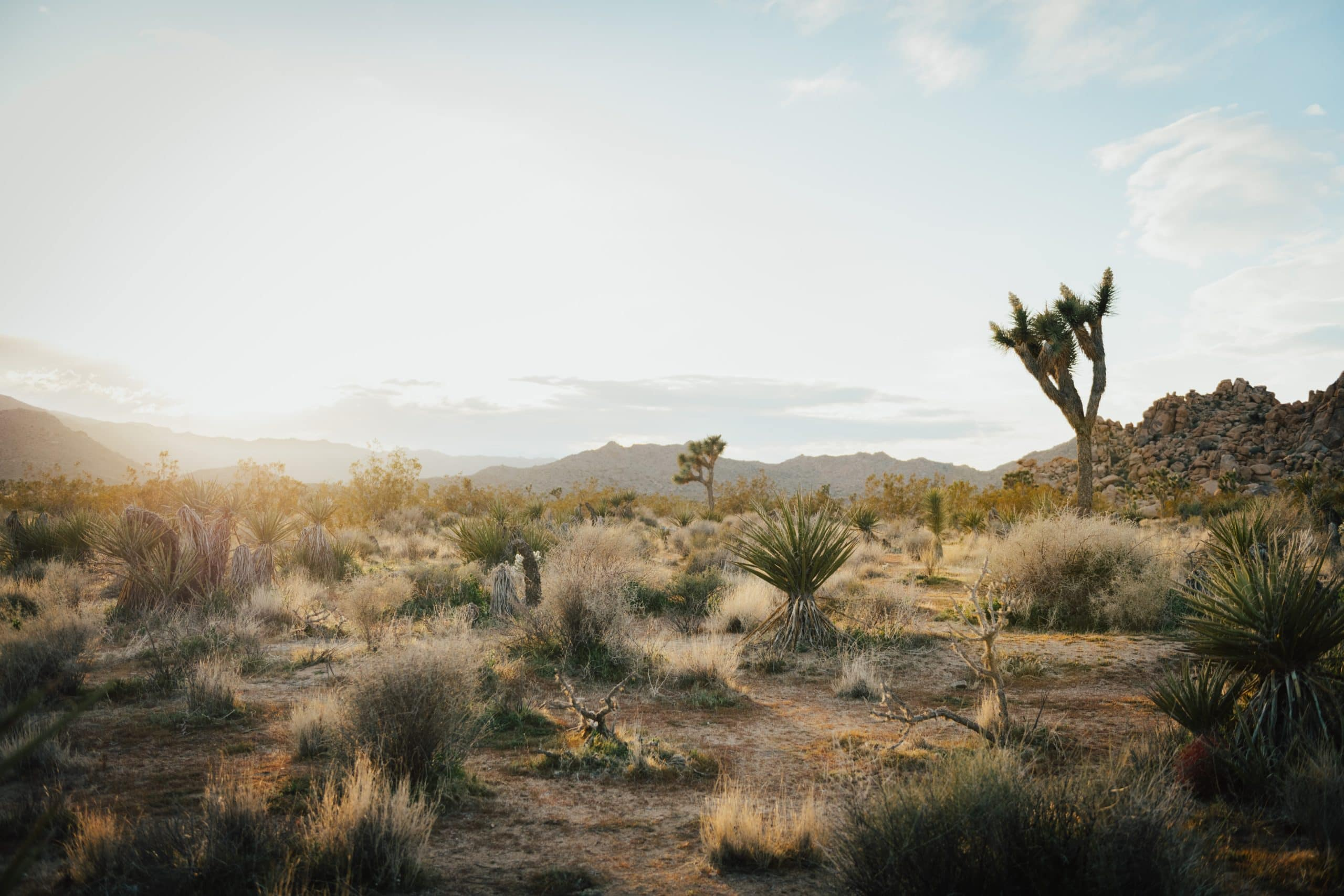 Joshua Tree desert in California.