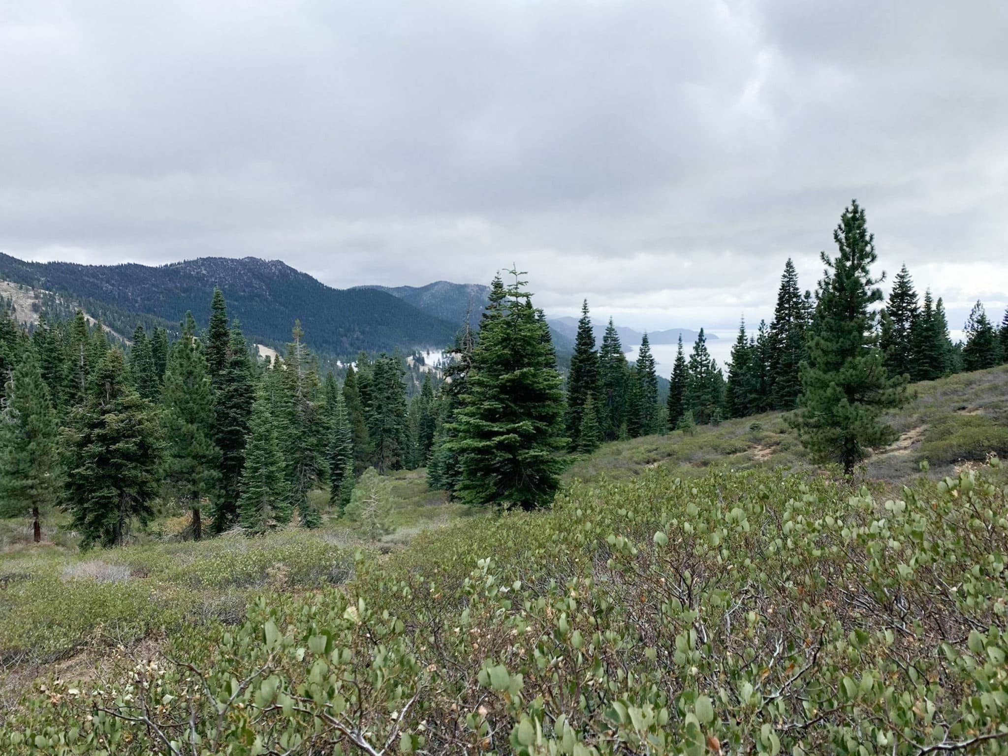 A meadow filled with pine trees and purple flowers in Lake Tahoe.