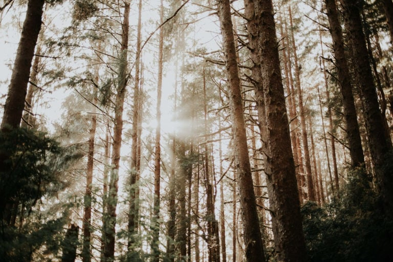 How to Plan a Sequoia National Park Elopement in 2021