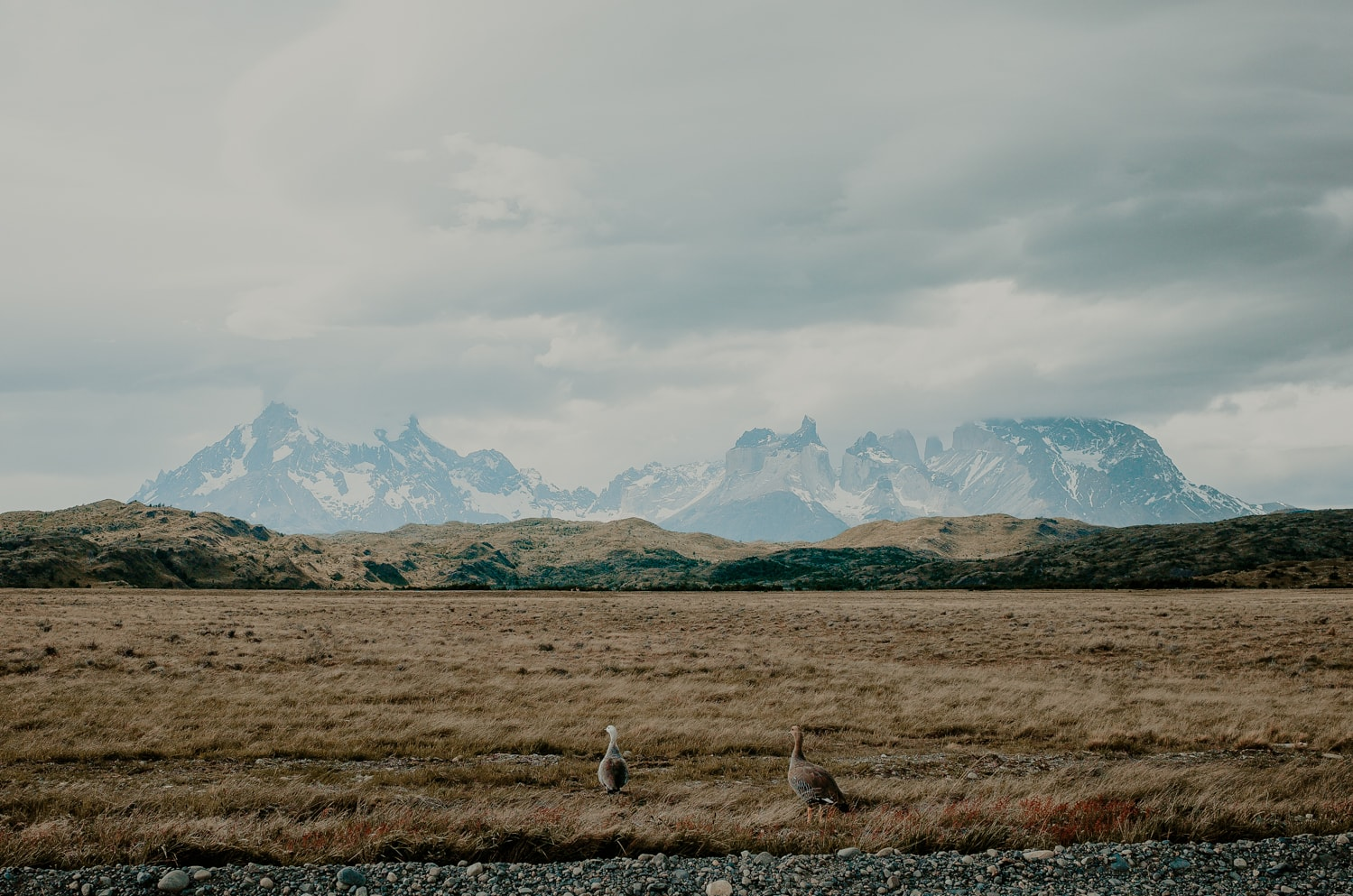 Birds in front of the mountains of Patagonia.