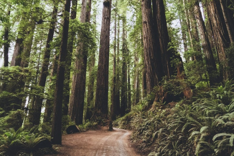 How to Elope in Redwood National Park in 2022